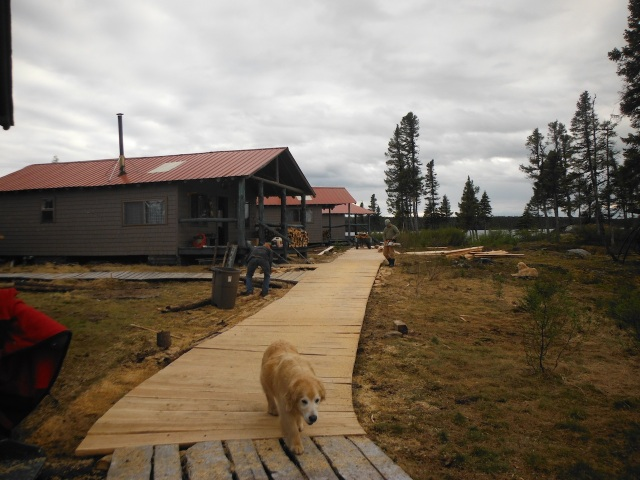 Camp Dog Bear Inspects Completed Work