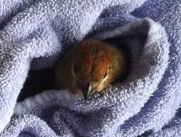 Nestled Birdie